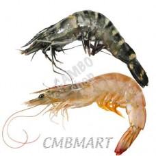 Shrimp.(25-35)