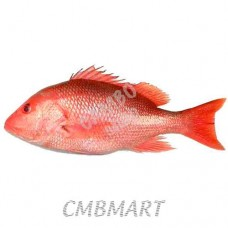 Red snapper 1pcs ≈0.5 kg