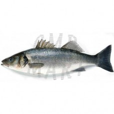 Seabass. The fish are cleaned
