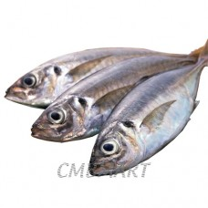 Indian mackerel 1 kg