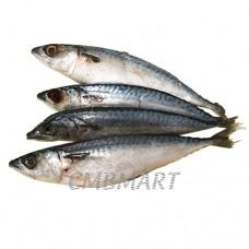 Small herring 1 kg