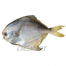Pomfred small 1 kg