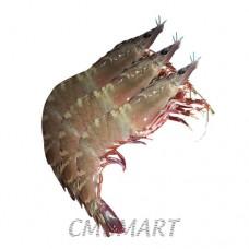 Shrimp. (20-25)