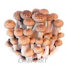 Shimeji mushroom 1 pack 140 g